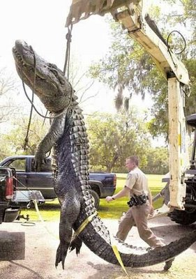 Another Huge Alligator Spotted in Alabama - Phantoms and Monsters Wiki