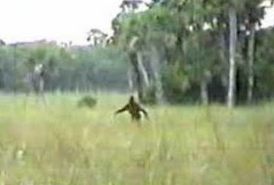 'Swamp Ape' Sightings Flap In South Georgia - Phantoms and Monsters Wiki