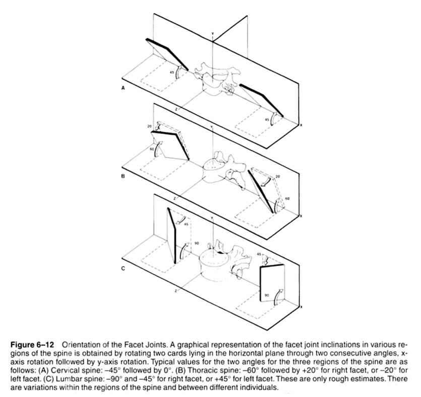 facet joint angles